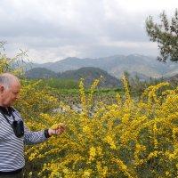 В горах Троодос.Кипр. :: Нелли *