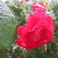 После дождя :: An-na Salnikova