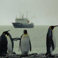 пингвины :: Валерий Рябцев
