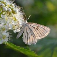 бабочка, цветы, ле́то :: Greta St