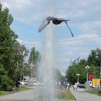 Птица и фонтан :: Вероника Громова