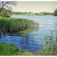 Озеро во Флёново. :: Игорь