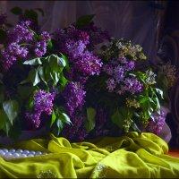 Сиреневый букет :: Татьяна Кретова