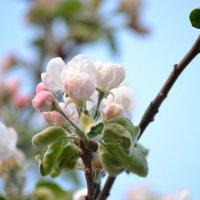 весна... :: Ксения Волкова