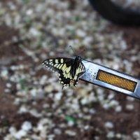 бабочка :: Анастасия Ли