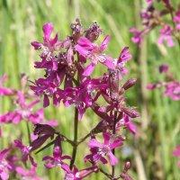 цветок на поле :: Ирина Шершнева