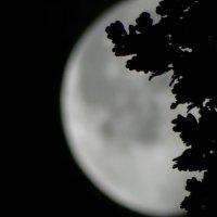 Листва в луне. :: Владимир Гилясев