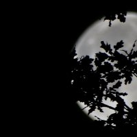 Луна в листве. :: Владимир Гилясев