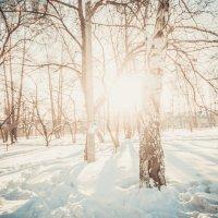 Зима, холода :: Андрей Хахалов