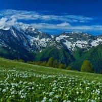 Западный Кавказ :: Вадим ZUBR Малышев