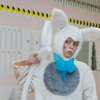 Из жизни зайцев :: Мария Арбузова
