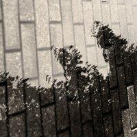 .. И на камнях растут деревья .. :: Арина Дмитриева