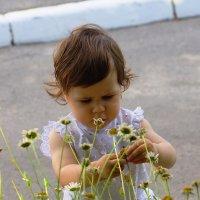 """"""" Ты лети , лети цветок через ...."""" , что там дальше ? Забыла ... :: Сергей Дорогокупля"""