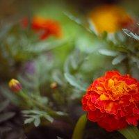 цветы :: Татьяна Ковалькова