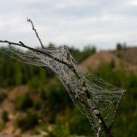 И в горах летают мухи. :: Яков Реймер