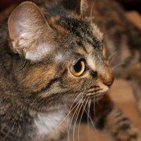 Кошка :: Альбина Козина