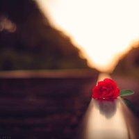 роза :: Аннета Матыцына