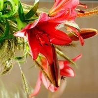 Соединились лилии с пшеницей золотой :: Сергей Дорогокупля