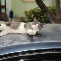 спящий кот :: Руслан Аширов