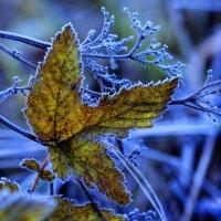 Первые заморозки 1 :: Alexander Asedach