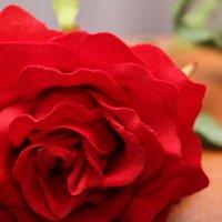 Роза :: Rodz'er Photo