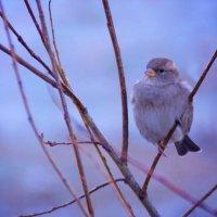 Bird v2.0 :: Андрей Алексеев