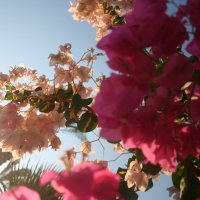 цветы :: Екатерина Иванова