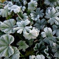 Дыхание зимы :: Алла Губенко