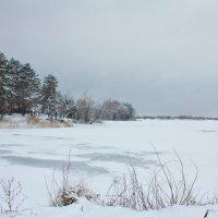 Черно-белая зима... :: Светлана Морсина