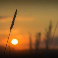 Вечер жаркого дня 2 :: Игорь Гришанин