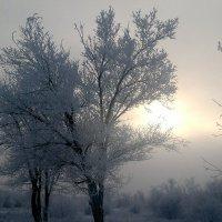 зимой бывает тепло :: Альбина Еликова