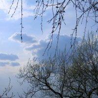 весна :: Ася Дуборенко
