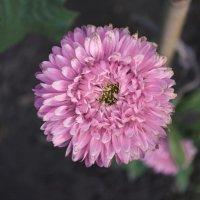 Обветренный цветок :: Never Forever