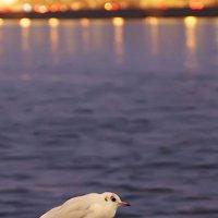 птичка :: Андрей Маслов