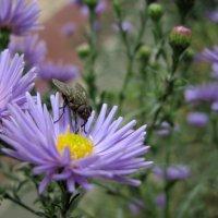Не все насекомые милые...(!) :: Настя Радаева