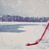 Красное на белом :: Светлана Морсина