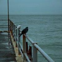 Black and white doves :: Александр Коновалов