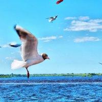 Разговор с чайкой :: Андрей Кравец