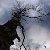 дерево и птица :: Андрей Маслов