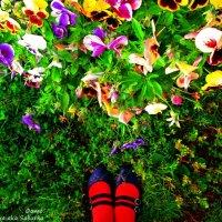 В саду :: Яна Сабурова