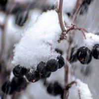 снегопад... :: Maxxx©