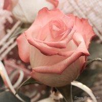 Desert rose :: Serj Serj