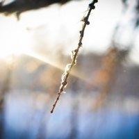 Замерзшая веточка :: Тихон Литвиненко