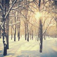Зимний день :: Тихон Литвиненко