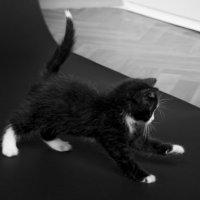 кошка :: Игорь Погорелов