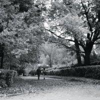 осень :: Kate Sparrow
