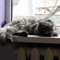 Мой кот) :: Александр Кузин