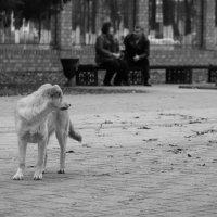 Жду счастья... :: Remian Mad