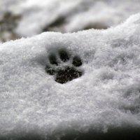 первый снег :: Анастасия Созинова
