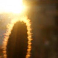 Солнце пустыни :: Александра К